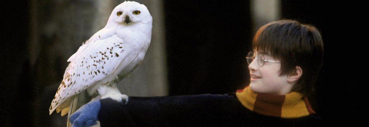 harry-potter-owl